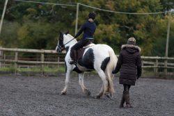 Norwood Equestrian, 5/11/2016
