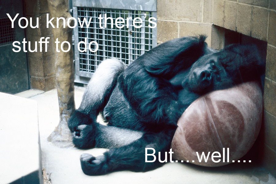 I photographed this at Bristol Zoo many years ago. I know this feeling!